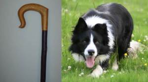 The Shepherd's Tools: Shepherd's Crook and Sheep Dog